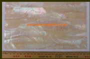 1pc Australian Greenlip abalone laminated sheet 140x240x0.5mm