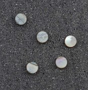 1pc Pink abalone dots 2 x 1.3mm