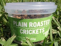 Roasted Crickets 20g