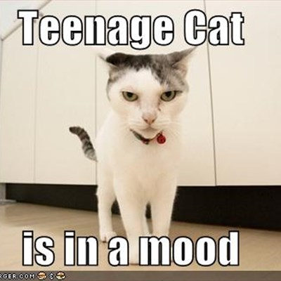 Adolescent Cats And What To Expect