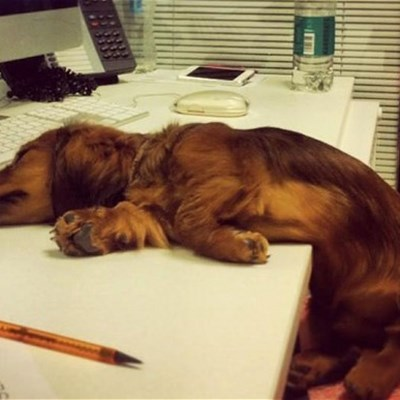 3 Benefits of Having an Office Dog