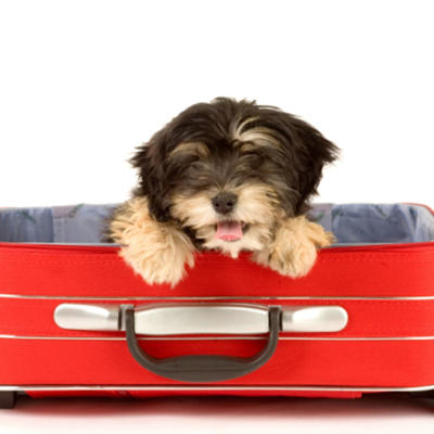 5 Tips for Traveling with a Dog