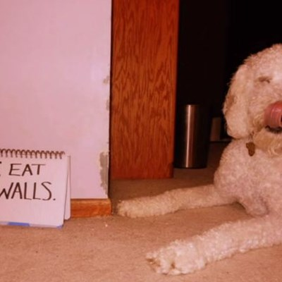 WATCH: Extreme Dog Shaming