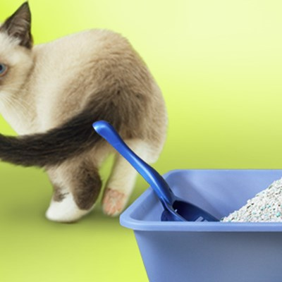 Types of Kitty Litter