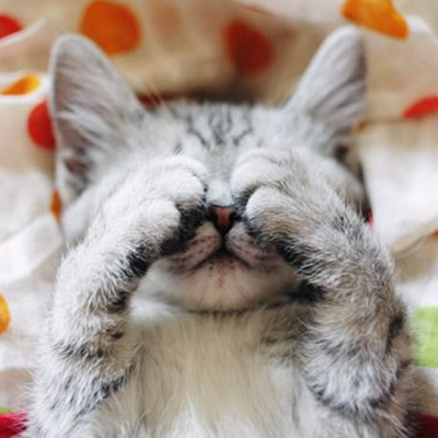 5 Reasons Why Your Cat Won't Stop Crying