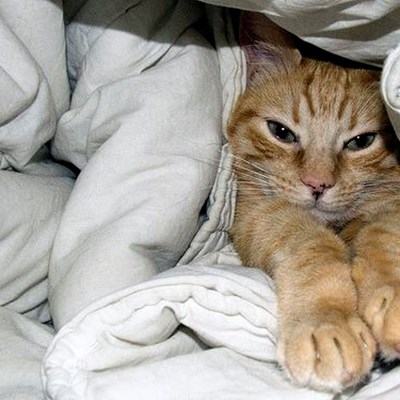 What To Do When Your Cat Wakes You Up Too Early