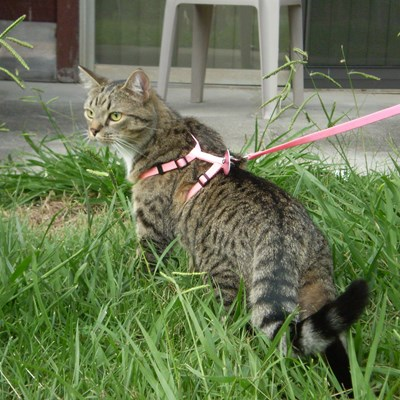 Turns out, you actually can take your cat for a walk