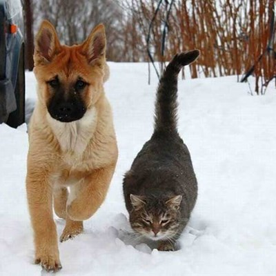 Caring For Your Pet During Winter