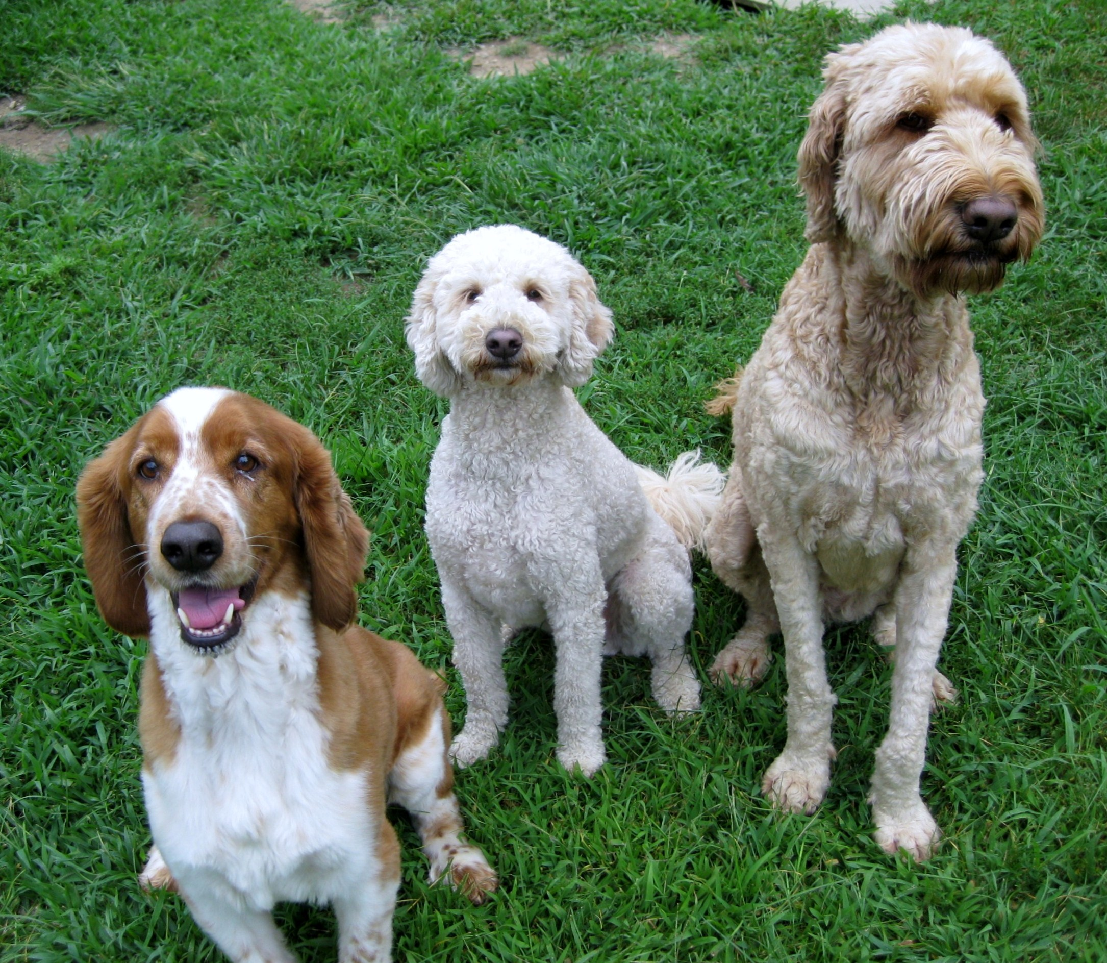 Introducing A Third Dog Into Your Home? Follow These Six Tips For Success!