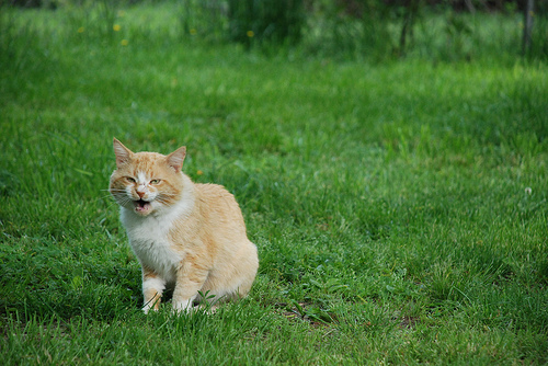 How Containment Systems Can Be Useful For You And Your Cat