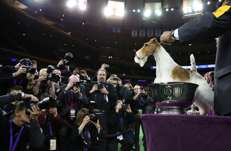 Westminster The Dog Show That Rules Them All