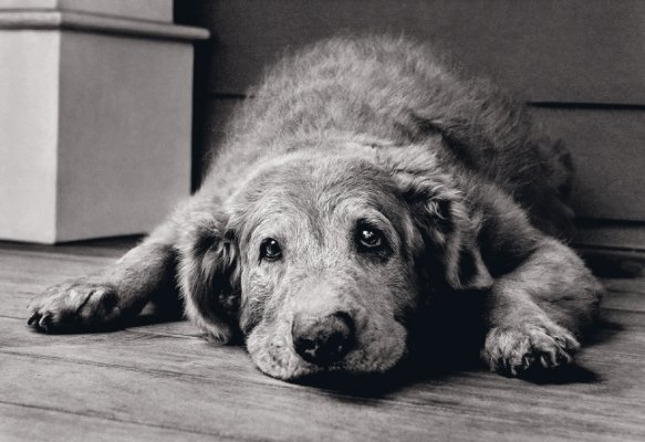 Dogs with Dementia: Signs to Look for and How to Help