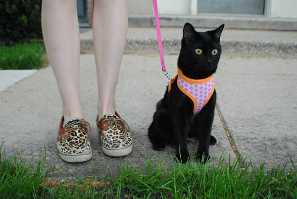 How To Leash Train Your Cat