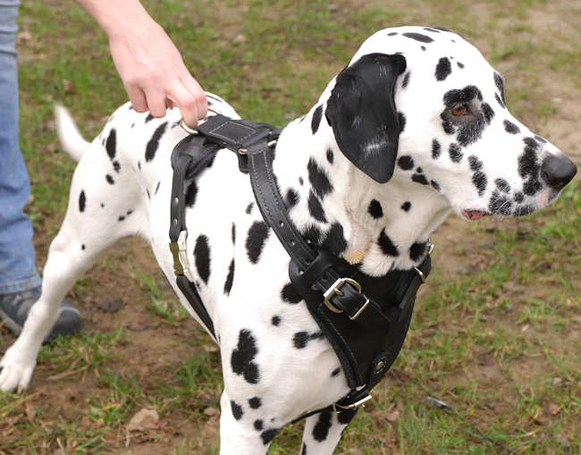 Should Your Dog Wear A Harness?