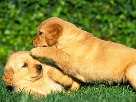 Games And Play Time Ideas For Your Puppy