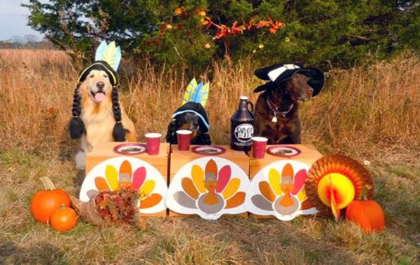 How To Keep Your Pets Happy And Healthy At Thanksgiving