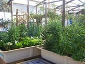 Greenhouse Tour - Sunday 14 May 2017