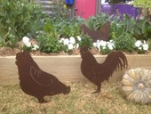 Rusty Tin Chooks
