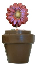 Chocolate Flower Sucker in Chocolate Pot
