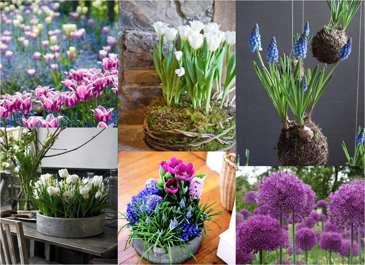Murdoch Florist - Time to plant your bulbs for spring flowers!