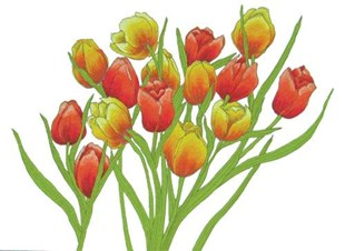 Tulip Time Cushion Cover