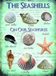 Seashells - Metal Wall Sign (3 sizes)