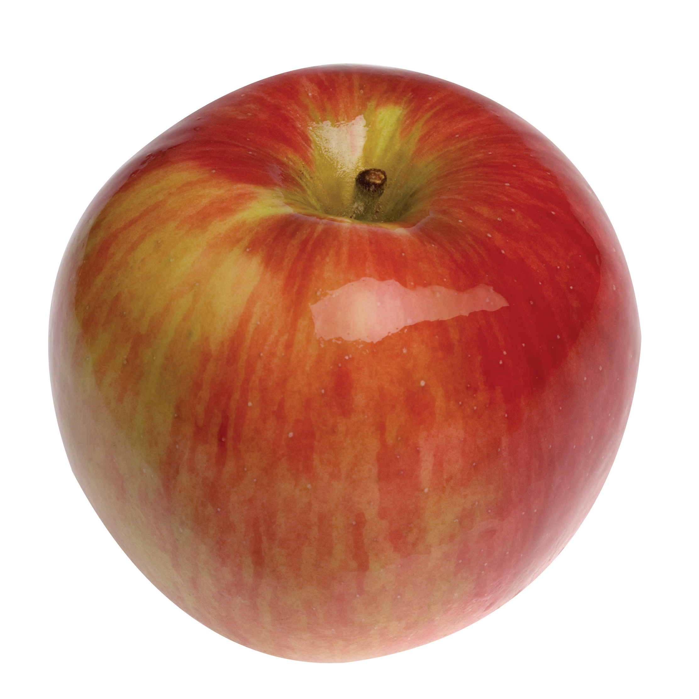 malus domestica apple johnathon blerick trees buy online