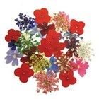Summer Blossoms (Dried Flowers) 24pk
