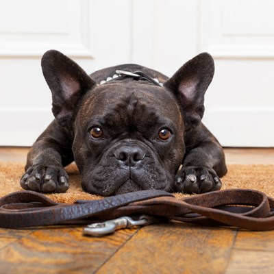 Teaching your dog good leash manners