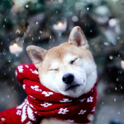 Winter Warmers: Keeping Your Pet Cosy This Winter