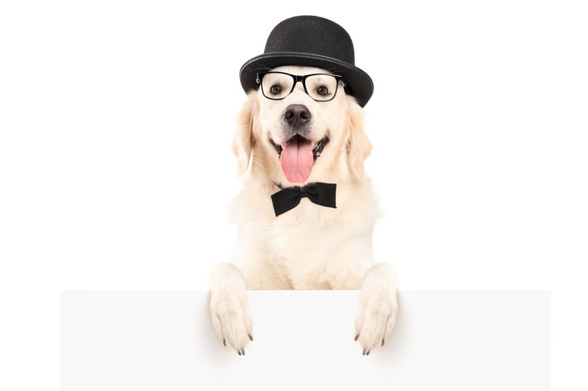 Signs your dog is losing his vision
