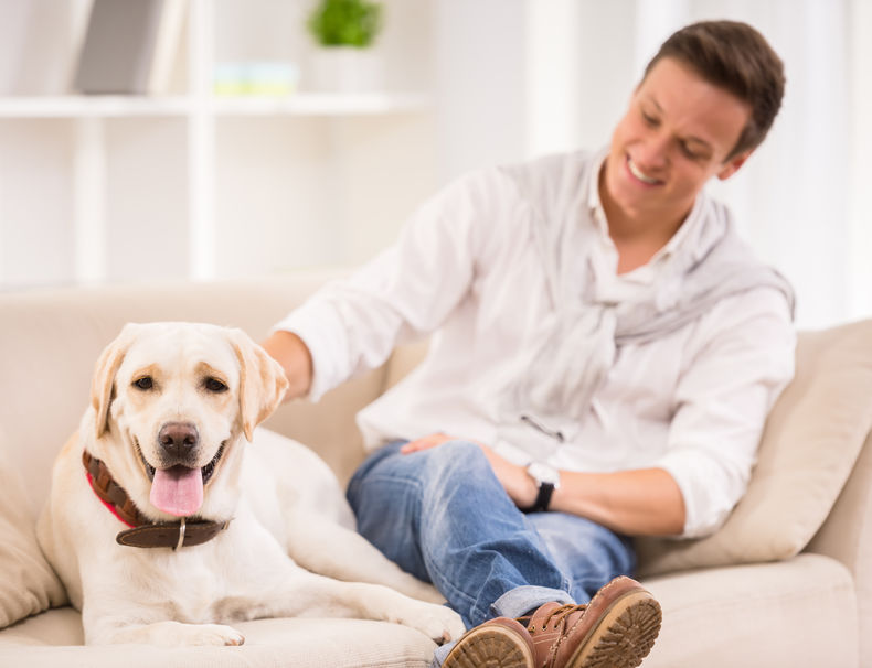 Pet boarding or pet sitting: Which is better?