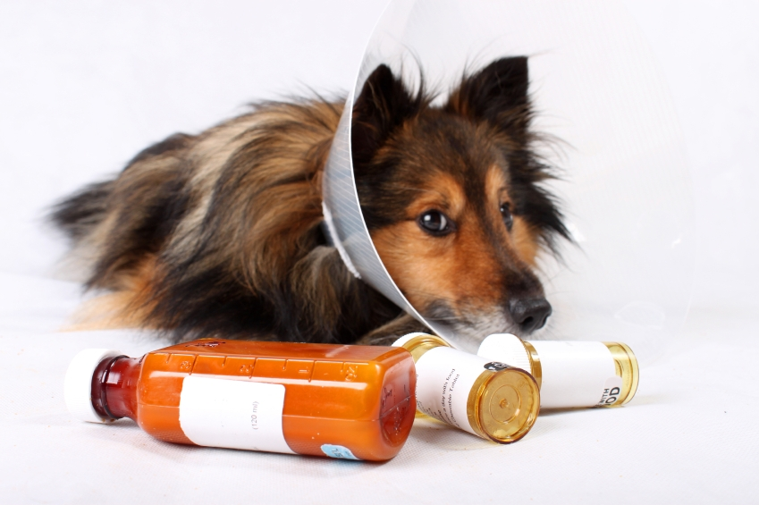 The Top 5 Symptoms to Be Aware of in Dogs